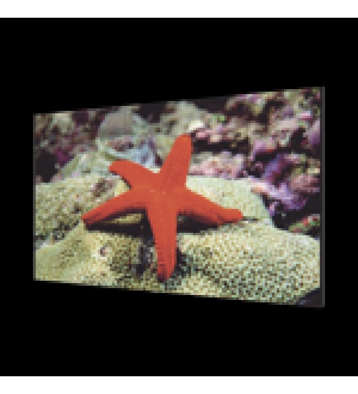 PANTALLA LCD 55 PARA TV WALL / ENTRADA HDMI - VGA - DVI - DP / MONITOR ROBUSTO